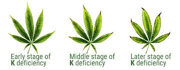 Cannabis Leaf Symptoms Chart Bedowntowndaytona Com