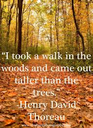 Thoreau Walden Quotes Fascinating Pinterest Photo Quote Henry David Thoreau REFLECTIONS OF A