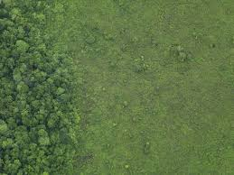grass field aerial. Simple Aerial Aerial View Of A Lush Grass Field Meeting The Edge Forest For Grass Field I