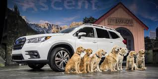 dogs to drives its marketing campaign
