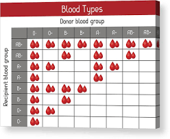 Chart Of Blood Types In Drops Medical And Healthcare Infographic Acrylic Print