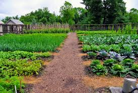 my vegetable garden is thriving down by the en coops all the plants are looking so great i am certain it will be a productive season