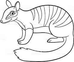 Small Picture Coloring Pages Little Cute Numbat Smiles stock vector art