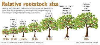 Tree Root Size Chart Picking Among The Best New Cherry Roots Good Fruit Grower