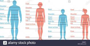 Man Woman Boy And Girl Size Chart Human Front Side