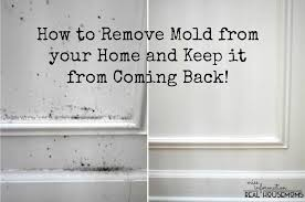 remove mold from your home and keep it