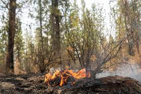 Bootleg fire: Largest wildfire in the ...