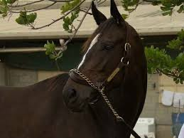 Image result for pictures of Zenyatta the racehorse