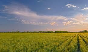 Растениеводство как отрасль сельского хозяйства ХитАгро ru Растениеводство Растениеводство отрасль сельского хозяйства