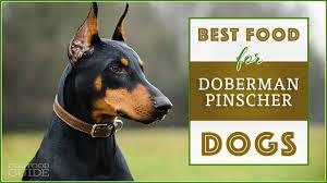 Best Food For Your Doberman Pinschers Top Puppy Adult