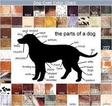 Dog Coat Color Chart Dog Coats Animals Dogs