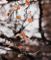 Image result for mùa đông