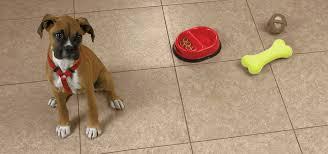 best flooring for dogs sebring services