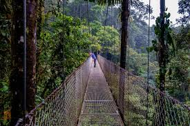 mistico arenal hanging bridge park a photo essay gone the the larger bridges span deep valleys in the rainforest and are quite high above the tree tops