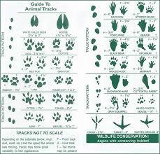 Ooey Gooey Good Animal Tracks Our Annual Holiday Activity