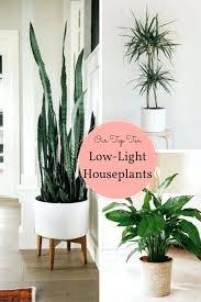best indoor plants low light hanging indoor plants low light indoor plants low light australia best indoor