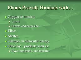 3 Plants ...