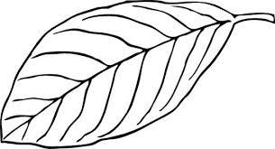 Jungle Leaf Black And White Clipart