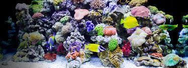 Small Picture Amazoncom Fish Aquatic Pets Pet Supplies Aquarium Dcor