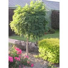Whites 1 X 30m Green Plastic Trellis Barrier Mesh  Bunnings WarehouseFruit Tree Netting Bunnings
