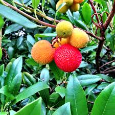 A Fruit Salad Tree Bears Up To Six Different Fruits Of The Same Different Fruit Trees