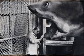ingmar bergman and the shark from jaws by john bryson