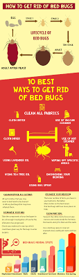 How to get rid of Bed Bugs - Infographic - ThePestKillers