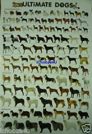 Details About Ultimate Dog Breeds Chart Educational Wall Poster 21 5x31 Inches More 80 Breeds