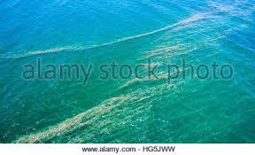 Resultado de imagem para IMAGENS DE COMIDAS PACIFIC OCEAN