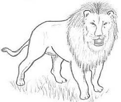 easy lion drawings in pencil.  Drawings How To Draw Lions And Easy Lion Drawings In Pencil