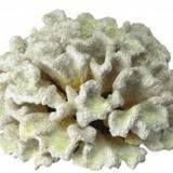 Искусственные <b>кораллы</b> и камни - <b>Аквариумы</b>, аквариумные ...
