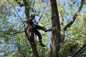 Arborist Careers Taddiken Tree