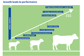 Calf Rearing Solutions Agrivantage