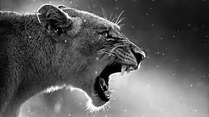 Lion Wallpaper 4k Desktop