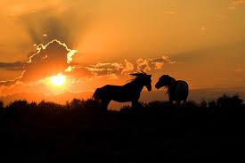 wild horses sunset. Exellent Horses Wild Horses Running Sunset  Photo2 With Horses Sunset A