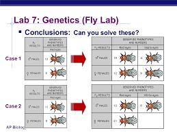 drosophila genetics lab report introduction acirc college paper drosophila genetics lab report introduction