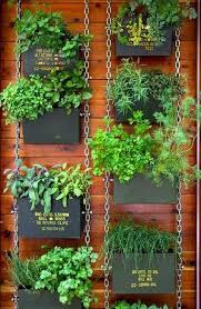 outdoor herb garden. TIps On Drying And Preserving Herbs Outdoor Herb Garden