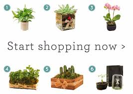 order plants online. Green Is A Colour Associated With Balance, Tranquillity And Rest Order Plants Online NetFlorist