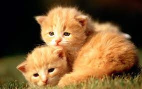 Cute Baby Animal Wallpapers (72+ ...