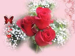 Red roses wallpaper, Love rose flower