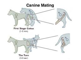 dogs and cats mating together.  Cats Dog Copulation  Google  Cat Lady Paren In Dogs And Cats Mating Together