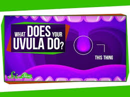 Adventures of the little koala: What Does Your Uvula Do Safe Videos For Kids