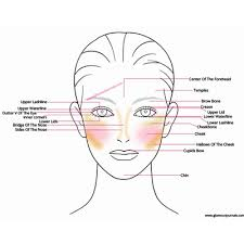 face anatomy face anatomy for makeup understanding technical terms of makeup