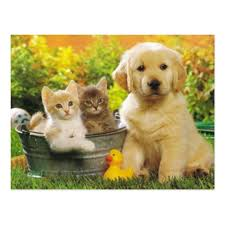 golden retriever puppy and kitten. Plain Puppy Kitten U0026 Golden Retriever Puppy Dog Blank Postcard Throughout And M