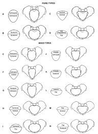 Baby Head Engaged Chart Presentation And Mechanisms Of Labor Glowm