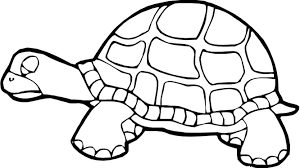 Small Picture Turtle Coloring Pages Free Printable Pictures Coloring Pages For