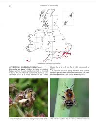 Bee And Wasp Identification Chart Uk Handbook Of The Bees Of The British Isles 2 Volume Set