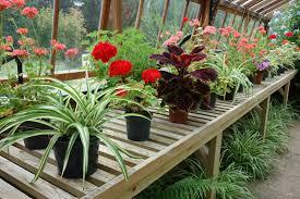 15 plantes dépolluantes qui purifient l air intérieur de votre maison actualités seloger