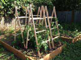 Diy tomato cage Bamboo Wooden Tomato Cages Homemade Tomato Cages Marshalls Weblog Pinterest Wooden Tomato Cages Homemade Tomato Cages Marshalls Weblog