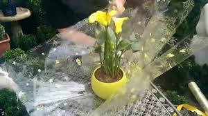 how to gift wrap a plant with jeannine at bents garden home